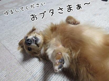 kinako4355.jpg