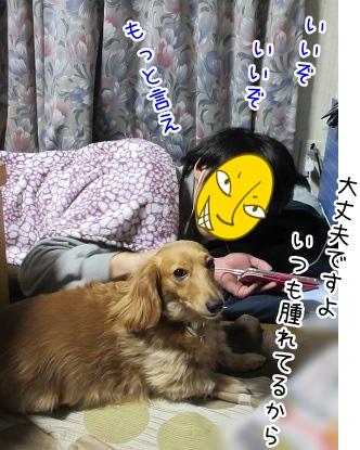 kinako4363.jpg