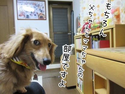 kinako4371.jpg
