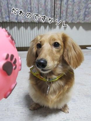 kinako4373.jpg