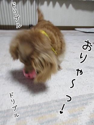 kinako4375.jpg