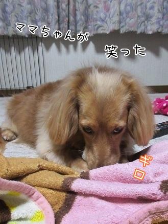 kinako4380.jpg