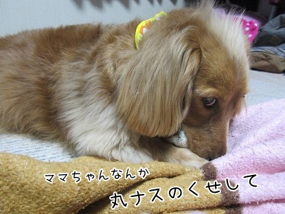 kinako4383.jpg