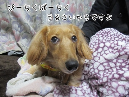 kinako4389.jpg