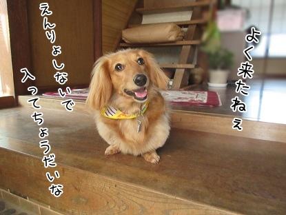 kinako4393.jpg