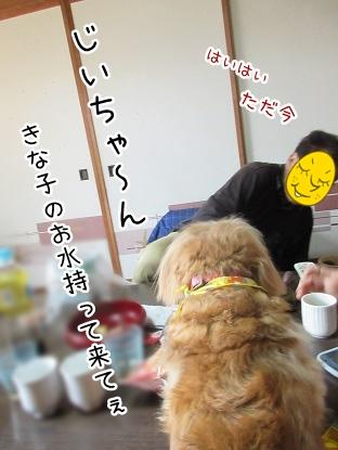 kinako4395.jpg