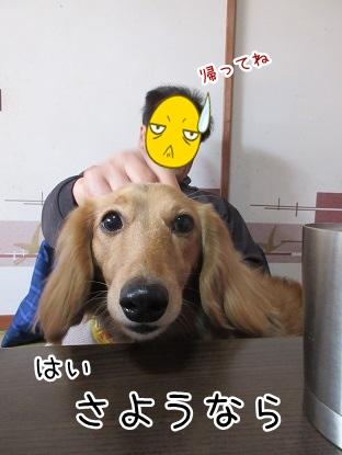 kinako4396.jpg