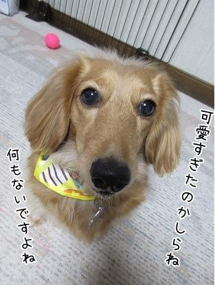 kinako4400.jpg