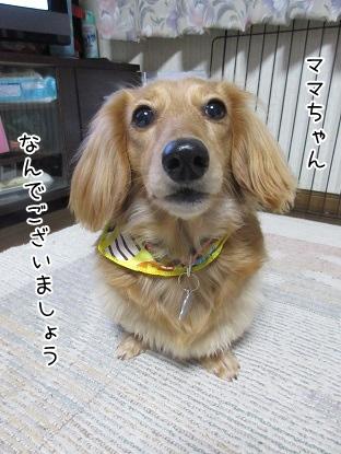 kinako4414.jpg