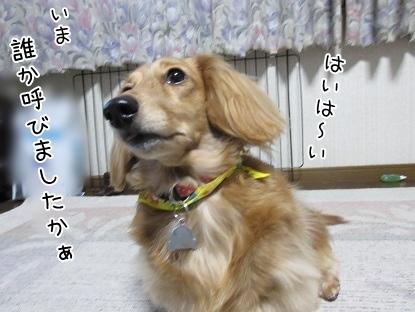 kinako4420.jpg