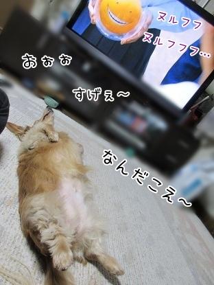 kinako4423.jpg