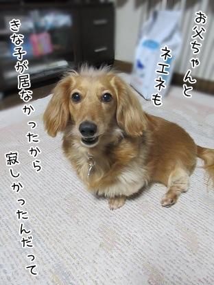 kinako4427.jpg