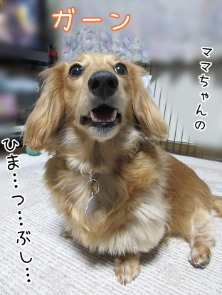 kinako4429.jpg