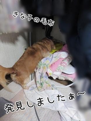 kinako4443.jpg