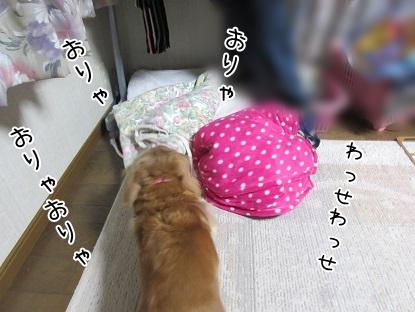 kinako4446.jpg