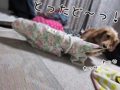 kinako4447.jpg