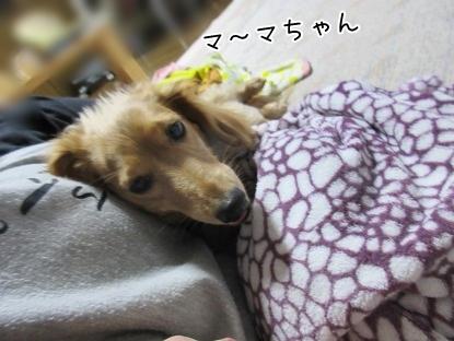 kinako4449.jpg