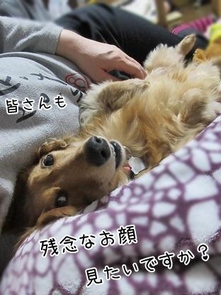 kinako4453.jpg