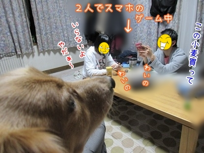 kinako4458.jpg