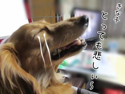kinako4461.jpg