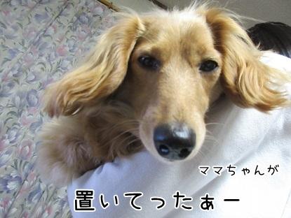 kinako4471.jpg