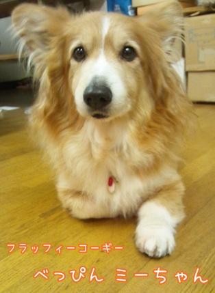 kinako4480.jpg