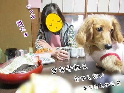 kinako4493.jpg
