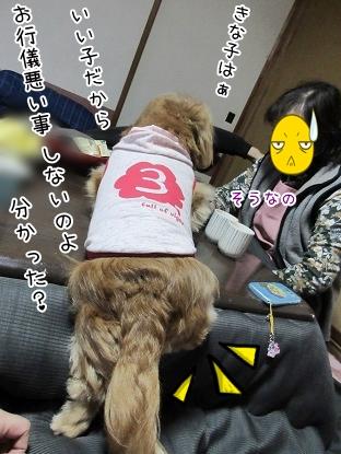 kinako4494.jpg