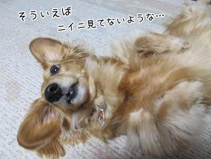 kinako4509.jpg