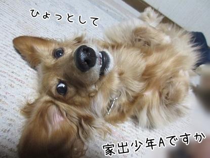 kinako4510.jpg