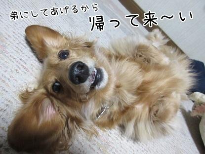 kinako4511.jpg