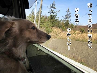 kinako4517.jpg