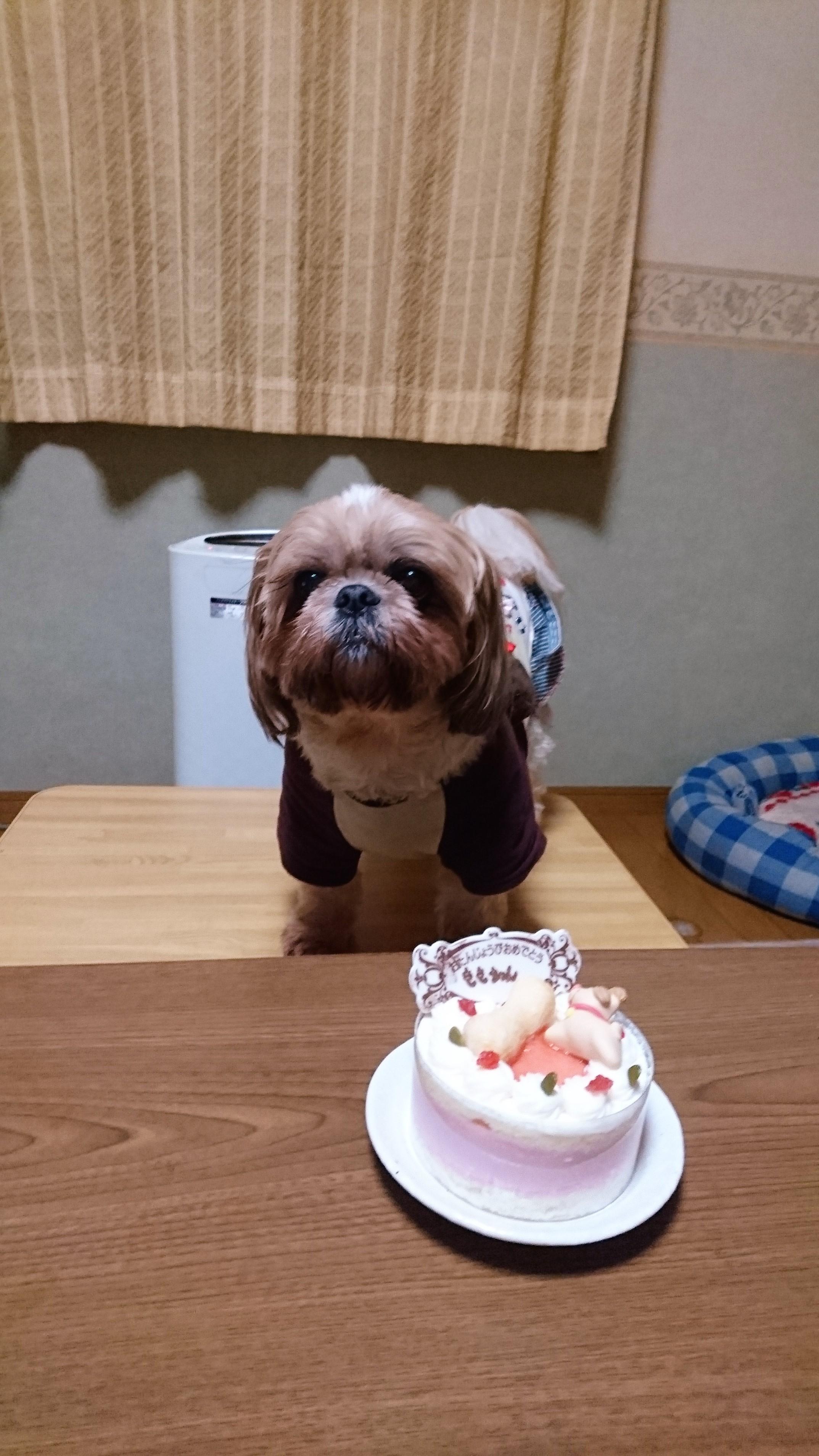 もも 7歳 誕生日