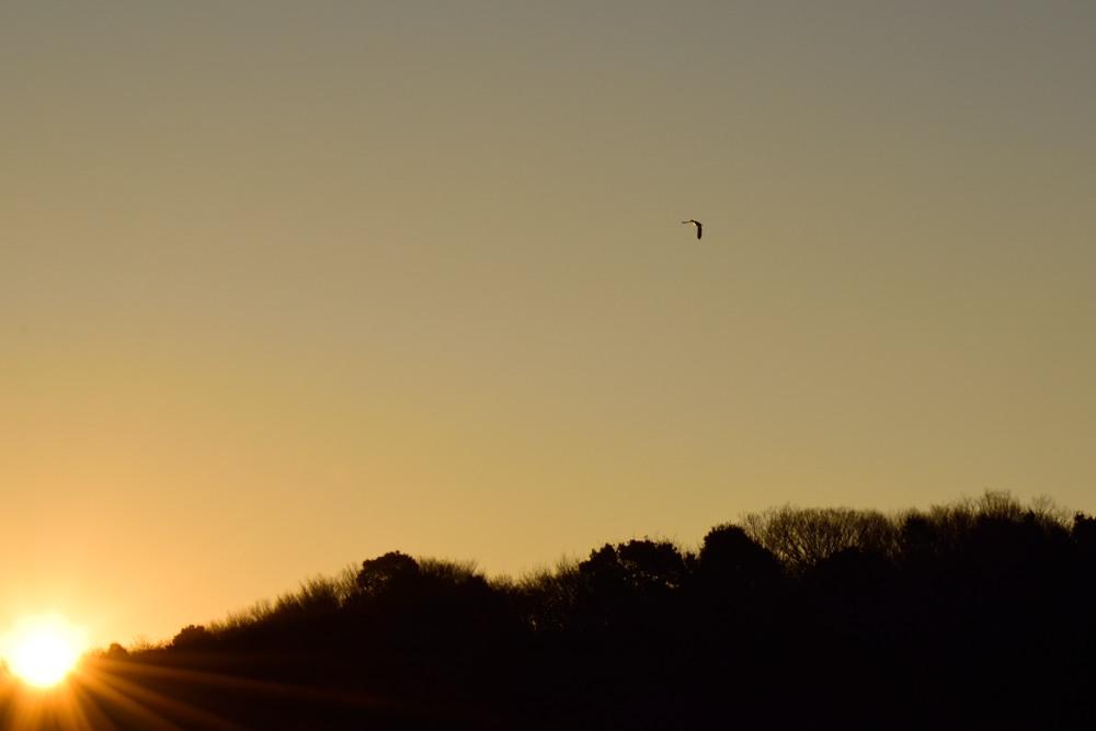 _古徳沼の朝陽DSC_0805