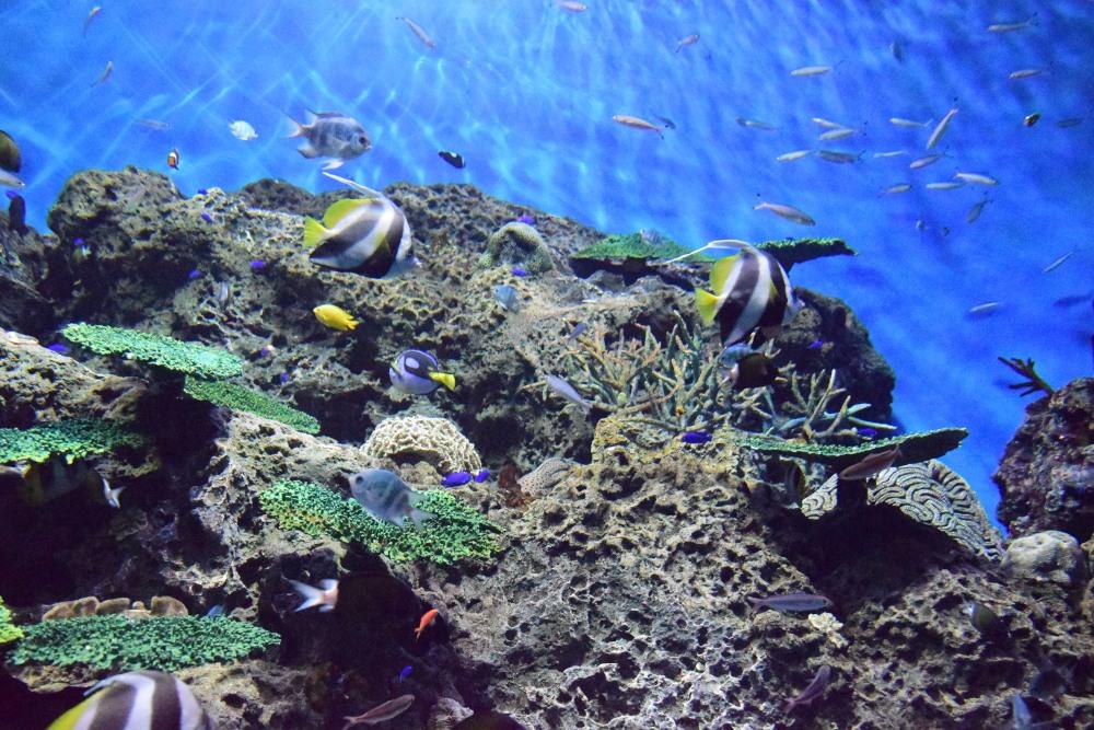 _沖縄の海DSC_1703