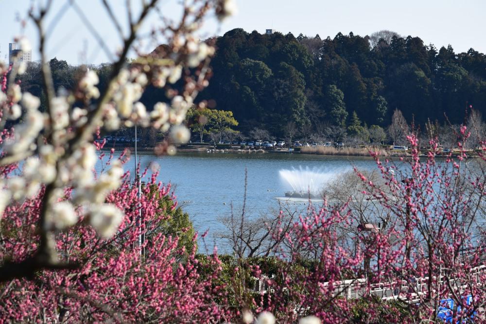 _千波湖DSC_2767