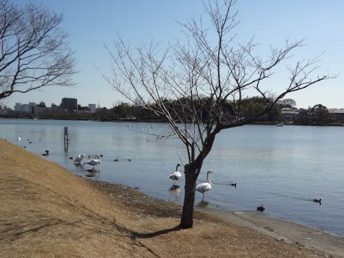 _千波湖DSC02496