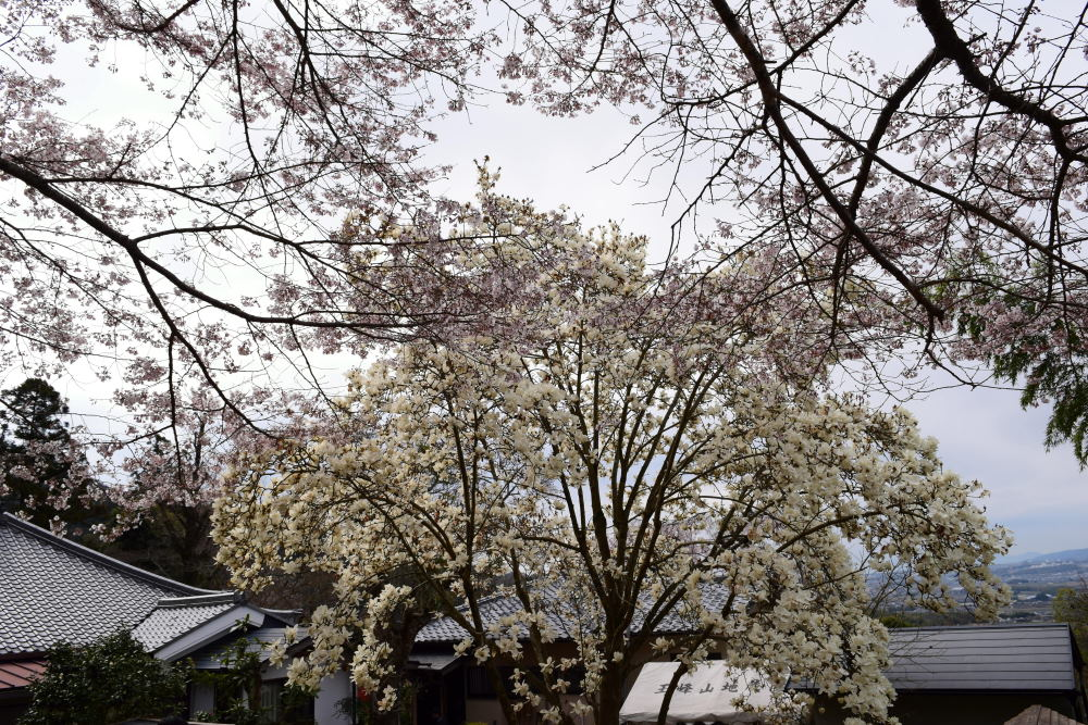 裏山DSC_4888