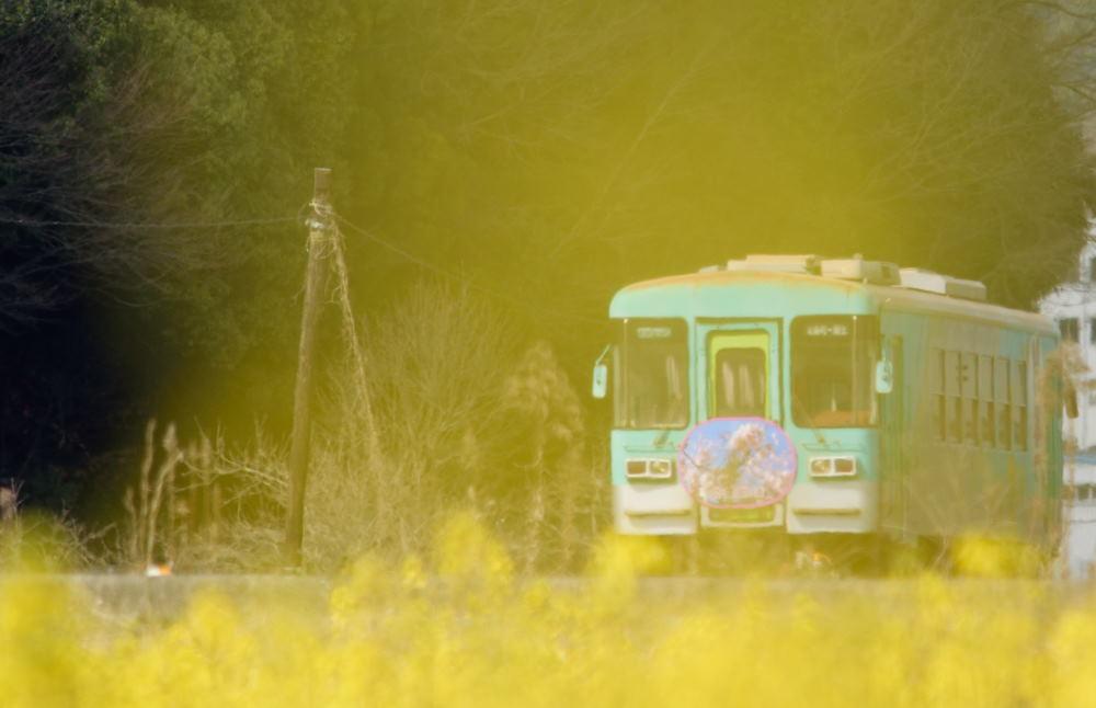 黄色DSC_4647