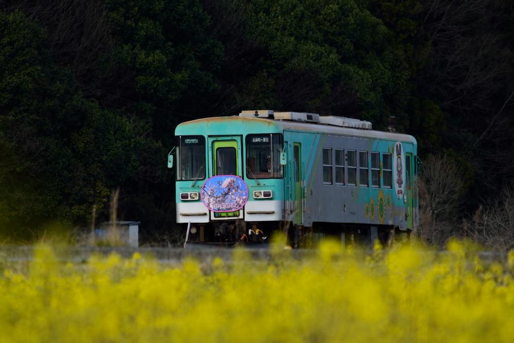 列車DSC_4673