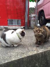 山のネコたち。