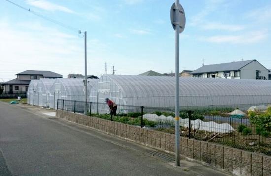 ichigo-1.jpg