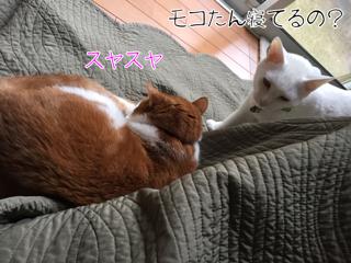 とめきち3
