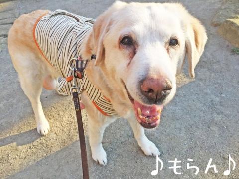 160303 ぽかぽか散歩-2