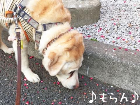 160303 ぽかぽか散歩-6