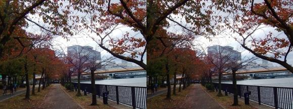毛馬桜之宮公園②(交差法)