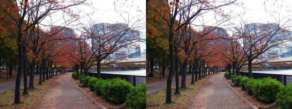 毛馬桜之宮公園①(平行法)