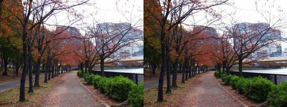 毛馬桜之宮公園①(交差法)