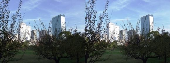藤田邸跡公園⑦(平行法)