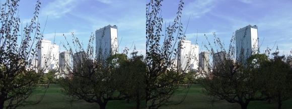 藤田邸跡公園⑦(交差法)